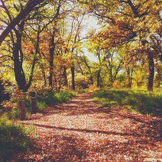 It's Always Sonny Blog :: Midwest Autumn Colors // A Photo Post #autumn #autumncolors #fallfoliage #kansas #hayskansas