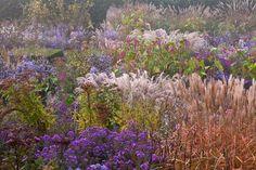 plantes d'automne table de buis taillé asters cimicifuga