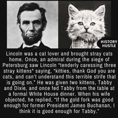 Stupid Funny, Funny Cute, Crazy Cat Lady, Crazy Cats, History Memes, Funny History Facts, Wtf Fun Facts, Interesting History, Faith In Humanity
