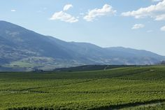 Canada Produces Wine Canada, Wine, Mountains, Landscape, Nature, Travel, Viajes, Naturaleza, Destinations