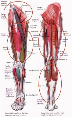 Performance training for muscles- leg-muscles