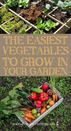 The easiest veggies to grow for the new gardener. First time gardener vegetables and backyard garden Backyard Vegetable Gardens, Veg Garden, Easy Garden, Easy Vegetables To Grow, Planting Vegetables, Organic Vegetables, Gardening For Beginners, Gardening Tips, Olive Garden