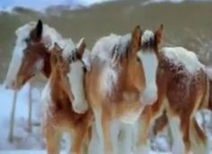 Relive the best part of Super Bowls past with this compilation of classic Clydesdale ads.