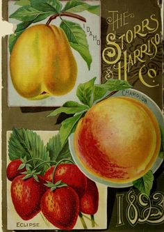The Storrs and Harrison Co. -Painesville Nurseries : Catalogue spring 1893