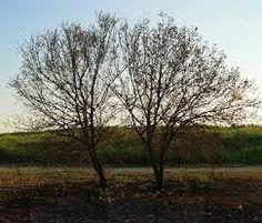 תוצאת תמונה עבור עצים תמונות