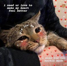 New Memes De Amor Animales 65 Ideas Memes Humor, New Memes, Funny Memes, Cute Cat Memes, Cute Love Memes, Funny Cute, Hilarious, Cute Baby Animals, Funny Animals