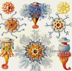 victorian sea creatures