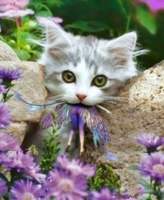 Cat has the Faerie in its mouth  Taken it over to a safer place