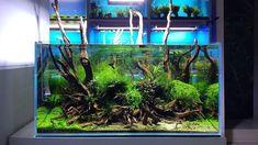 #fish #tank #aquarium - For betta fish info: https://aboutbettafishtanks.com/