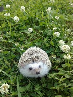 hedgehog love!