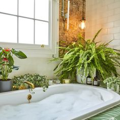 Biophilic & Sustainable Interior Design · 8 Best plants and flowers against indoor air pollution · DforDesign Indoor Ferns, Indoor Plants, Hanging Plants, Plantas Indoor, Bathroom Plants, Bathrooms With Plants, Bathroom Ideas, Bathroom Flowers, Garden Bathroom