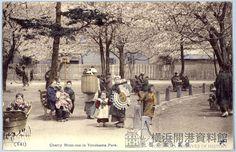 明治末から大正初期の横浜公園の桜。