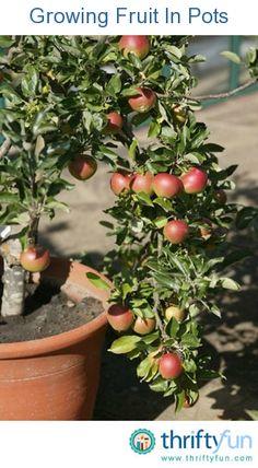 Growing Fruit In Pots