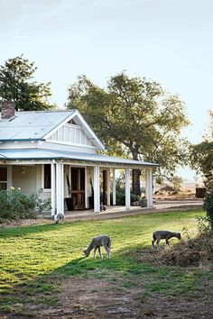 Weatherboard farmhouse surrounded by poddy lambs at a property in Quandialla, NSW | Photography: Brigid Arnott