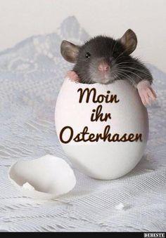 Moin ihr Osterhasen.. | Lustige Bilder, Sprüche, Witze, echt lustig