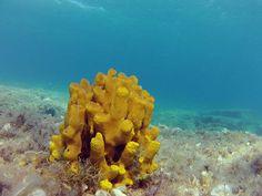corals @ the Saronic Gulf