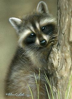 A Raccoon.// Will you just LOOK at That Fur. Bloody Hell. Such an awesome job of…