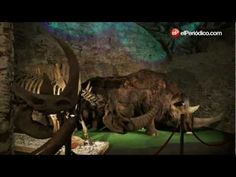 Visita al Museo del Mamut