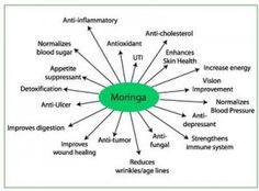 Amazing! One plant has so many benefits - Moringa Oleifera