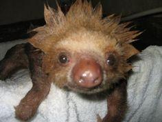 I like my baby sloths clean.