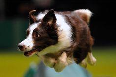 Flying dog 3