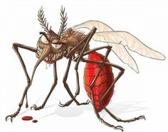 Working with unwelcome household pests can actually try your patience. Mosquito Control, Pest Control, Killing Fleas, Mosquitos, Wood Burning Crafts, Arte Horror, Healthy Pets, Bugs And Insects, Cartoon Drawings