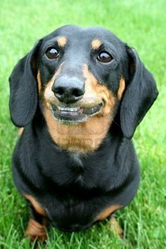 Doxie smile!