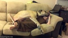 great dane as blanket - prefer big dogs! Big Dogs, I Love Dogs, Puppy Love, Cute Dogs, Friday Funny Pictures, Dog Pictures, Animal Pictures, Funny Friday, Winter Pictures