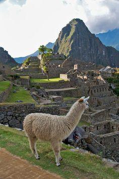 Machu Picchu, Peru - Llamas are my favourite animal . Ergo, I MUST see Peru one day! Machu Picchu, Places Around The World, Travel Around The World, Around The Worlds, Places To Travel, Places To See, Peru Travel, Hawaii Travel, Vacation Places