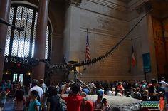 American Museum of Natural History - Manhattan - Il Viaggiatore Saggio