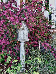 Depósito Santa Mariah: Country Garden!