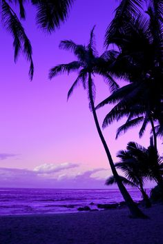 Purple Hawaii, Silhouetted palm trees at a tropical beach sunset.