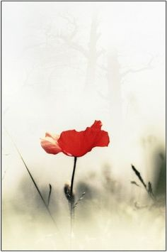 I love poppies.  This is gorgeous