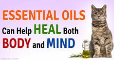 According to Dr. Shelton, a holistic and integrative veterinarian, talks about how helpful essential oils in healing your pet's body and mind. http://healthypets.mercola.com/sites/healthypets/archive/2015/02/22/essential-oils-pets.aspx