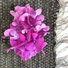 Pink Hydrangea on black vintage rag rug.