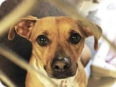 Pictures of JUDY a Dachshund Mix for adoption in Scottsdale, AZ who needs a loving home.