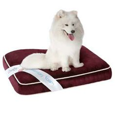 Simmons Deep Red Orthopedic Napper Dog Bed at PETCO