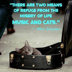 #catquotes #catquote #crueltyfreeblogusa #catlovers #catloversclub #catloversworld #catloverscatoftheday #catloversday #catloversonly #catloverscommunity #catloversbest #catloversclubs Lovers Day, Cat Lovers, Cat Love Quotes, Cat Day, Funny Cats, Sayings, Words, Music, Life