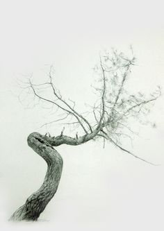 Branches on Behance