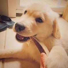 Gus The Golden ♥