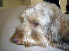 Pepto Bismol Side Effects In Dogs