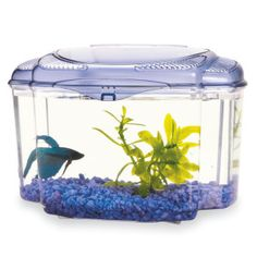 Betta Fish Class Pet - Each week, a student helper updates the class pet's blog.  First person entry discusses what the pet has seen in the classroom that week.