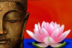 @solitalo El Loto representa la mente iluminada que crece en las aguas fangosas del Samsara. En el budismo, se dice que el corazón es una flor que no ha abierto, pero que cuando una persona desarro...
