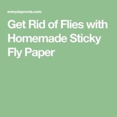 Get Rid of Flies with Homemade Sticky Fly Paper Homemade Fly Traps, Get Rid Of Flies, Fly Paper, Fly Spray, Life Organization, Organizing, Sticky Paper, Fruit Flies, Life Hacking
