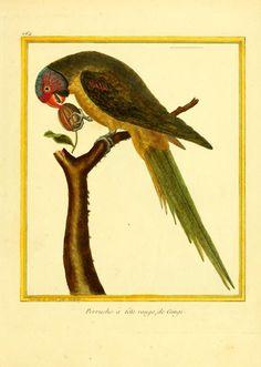 Planches enluminées d'histoire naturelle /. Paris? :s.n.,1765-1783?. biodiversitylibrary.org/page/35207133