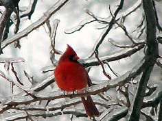 Every time I see a red cardinal I think of my grandparents and the legacy they left!