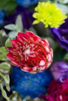 Protea Repense in Red Floral Design, Workshop, Rose, Flowers, Plants, Pink, Atelier, Floral Patterns, Work Shop Garage