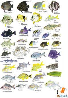 Infografías de peces 49