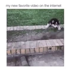 GIF Brother, help me please, I think I can not climb myself