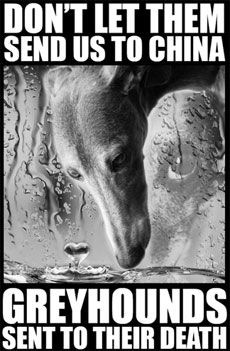 Stop the Export of Greyhounds to China